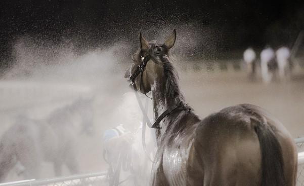 Final Horse